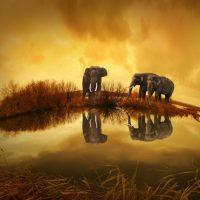 tabloluk hayvan resimleri (1)