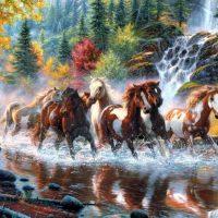 tabloluk hayvan resimleri (10)