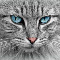 tabloluk hayvan resimleri (11)