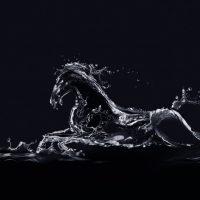 tabloluk hayvan resimleri (17)