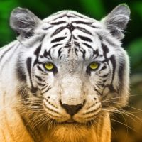 tabloluk hayvan resimleri (8)